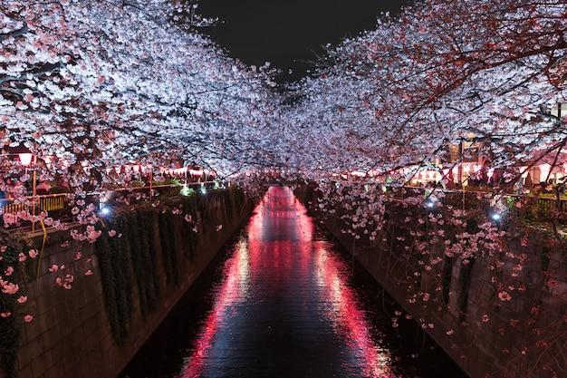 Сакура, цветок сакуры с светом ночью в реке мегуро, токио, япония