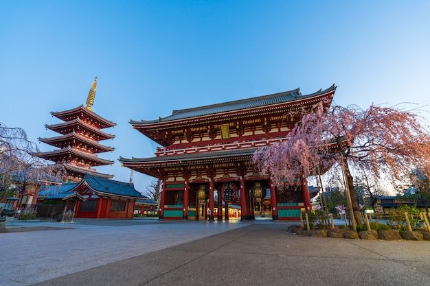 朝の桜と浅草寺