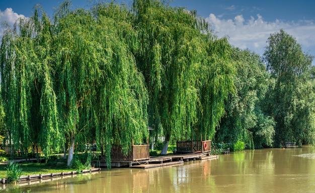 ウクライナ、ビルコボの村の近くのドナウ川