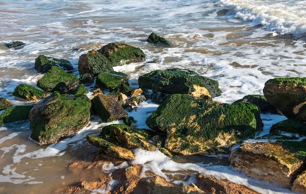 海の端の石