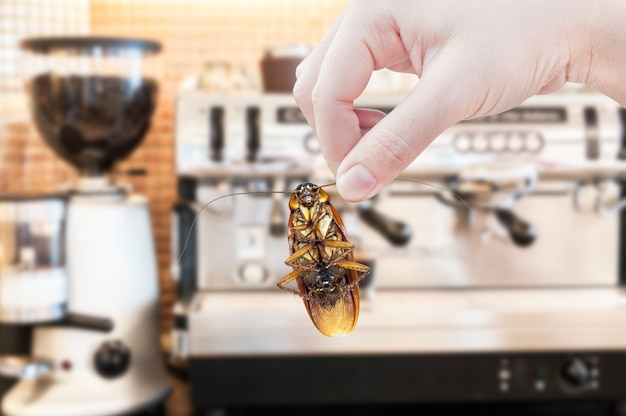 新鮮なコーヒーマシンにゴキブリを持っている女性の手