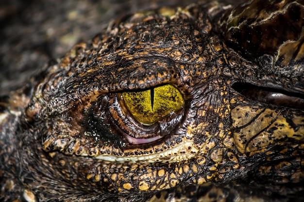 ハンターの黄色い目。