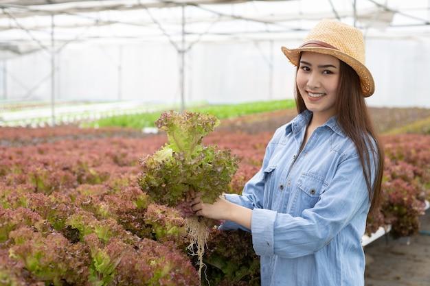 女性は有機野菜農場で赤いカシを集めています。