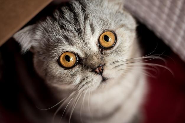 赤いバスケットの猫。