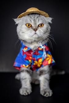 スコティッシュフォールド猫はシャツと帽子を着用しています。