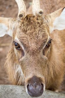自然の中で鹿の野生動物。