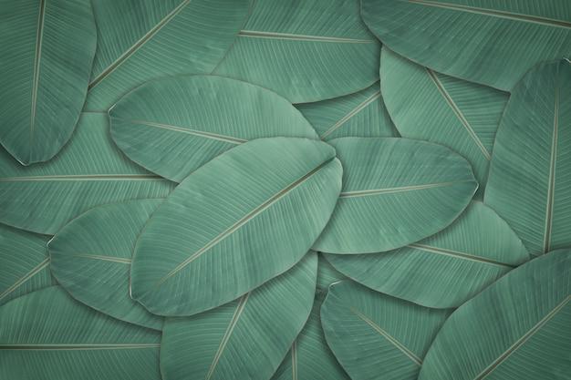 濃い緑の葉のテクスチャ背景。背景や壁紙のための自然の葉の植物。