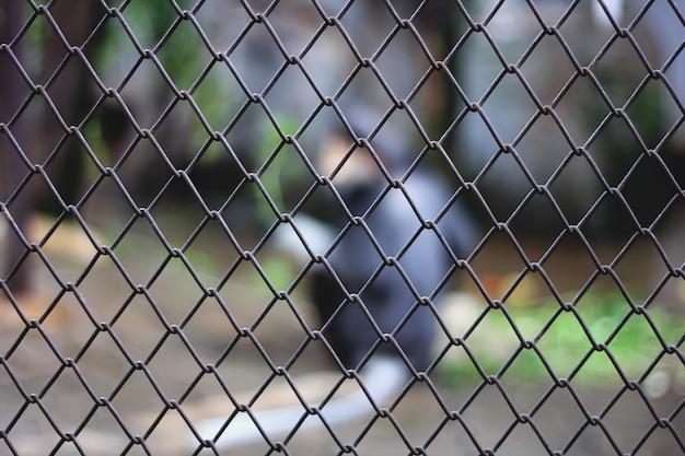 檻の中の動物をぼかし