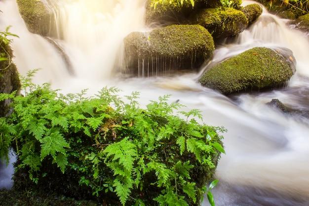Мягкий водопад с зелеными растениями на скале в сезон дождей
