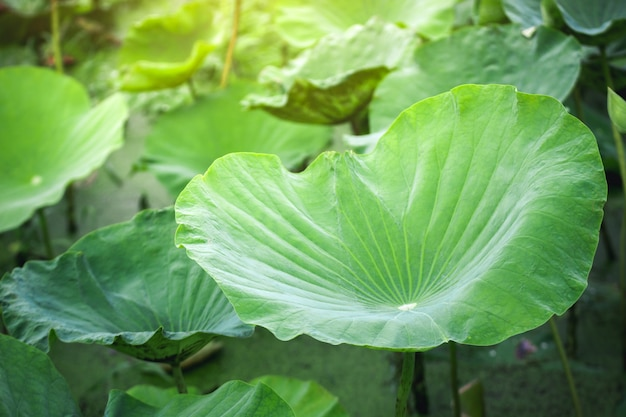 ソフトフォーカスとクローズアップ美しい葉