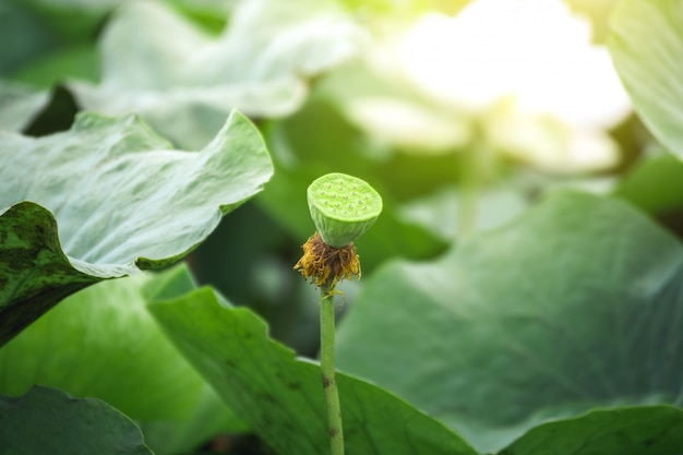 Мягкий фокус и крупным планом красивый лист