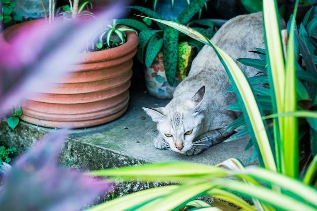 庭でタイの猫、茶色の虎のパターン。