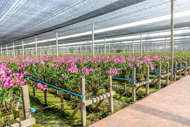 Питомник растений орхидей