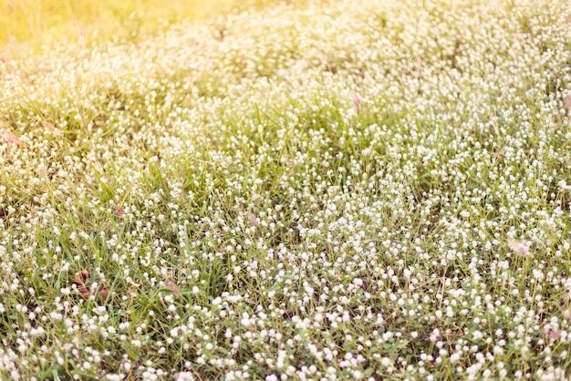 Белые маленькие цветы