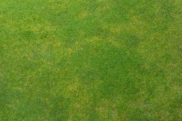 緑の芝生の背景テクスチャ