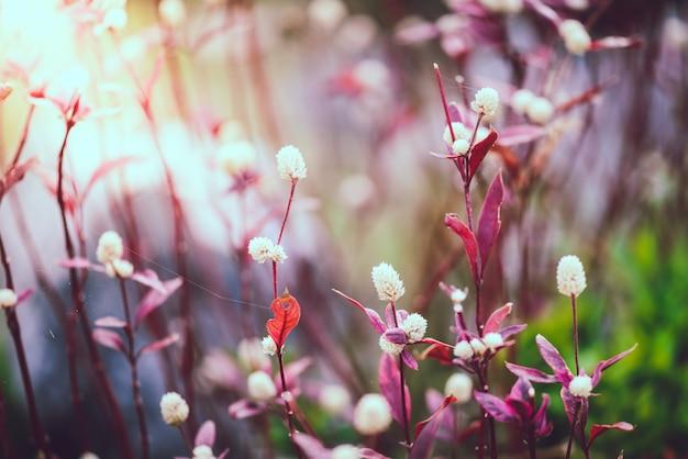 タンポポの植物