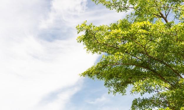 Природа зеленых листьев