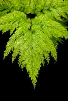 緑のシダの葉熱帯雨林の葉植物