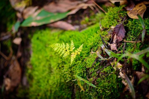 Мос в тропическом лесу