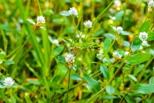 草の上のトンボのマクロを残します。自然の中のトンボ