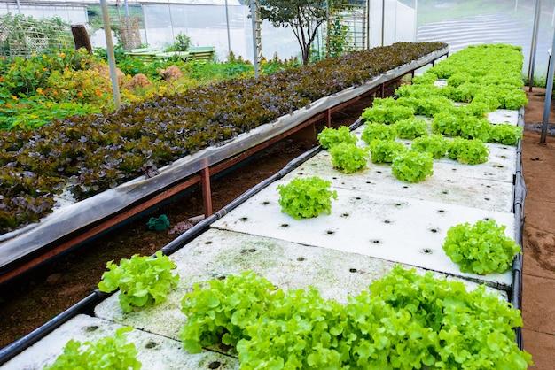 水耕栽培で育つ野菜