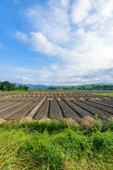新たに成長している農業野菜の風景