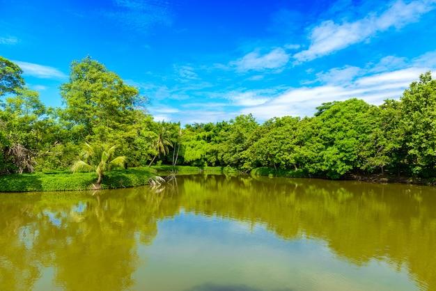 Обилие растений и деревьев, голубое небо и пруды в парке и ботаническом саду шри накхон хуан хан
