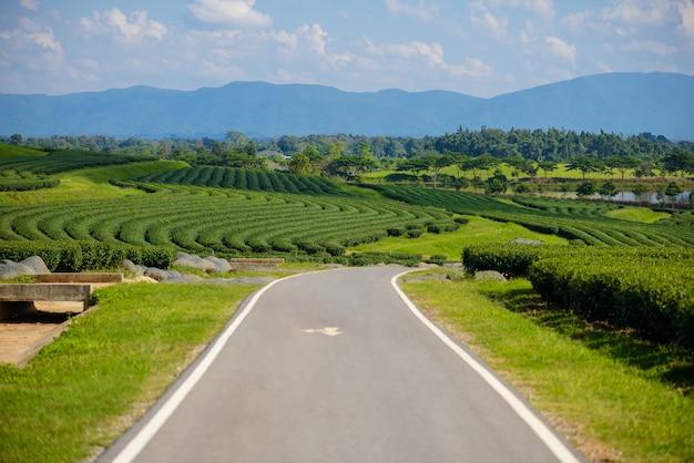 Поле зеленого чая с голубым небом