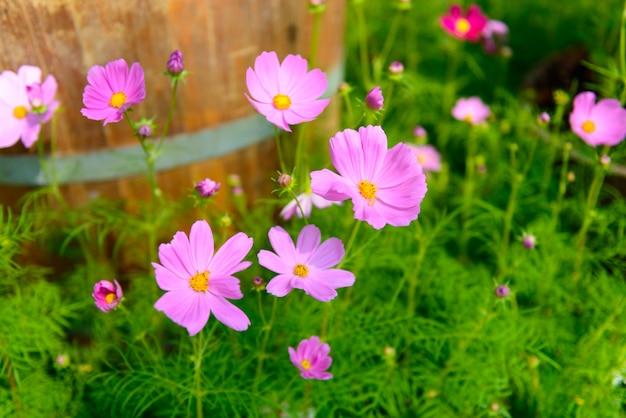 庭の色とりどりの花