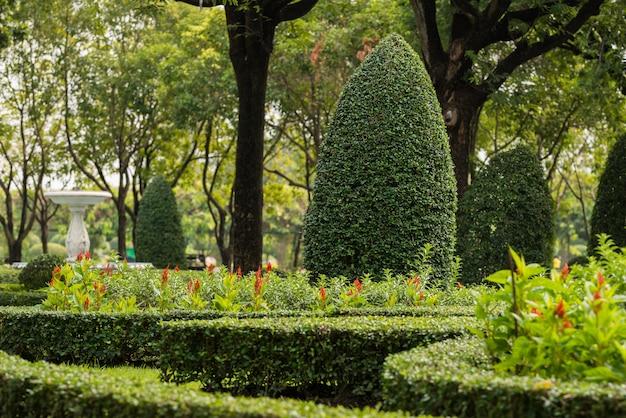 装飾的な木とガーデニングと造園