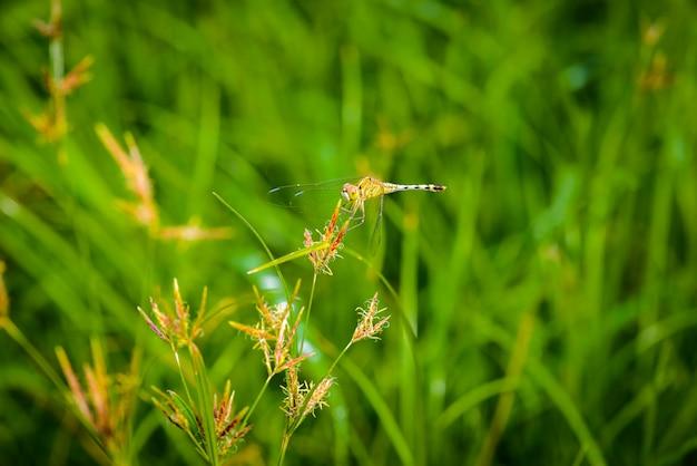 草の上のトンボのマクロを残します。自然の中でのトンボ