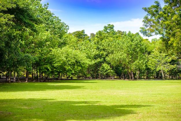 Обилие деревьев, голубое небо и газон в парке шри накхон хуан хан и ботаническом саду