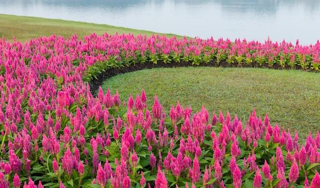 花の庭の背景