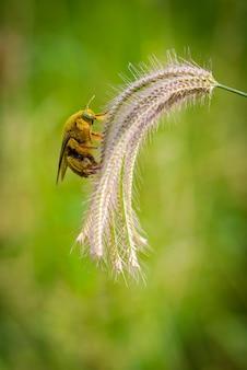 Шмель ловит на цветах траву