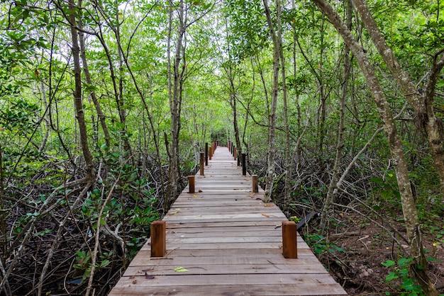 木製の方法で森の美しい風景