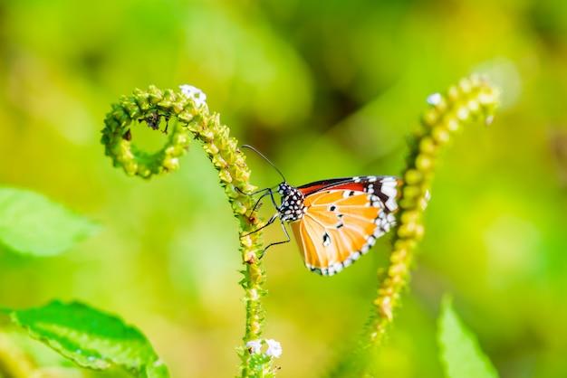 蝶が食べている