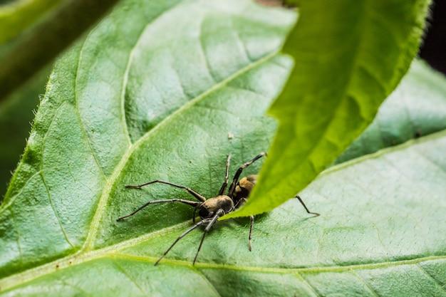 Паук на зеленом листе в парке