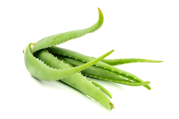白背景にアロエベラ植物。アロエベラは皮膚治療として伝統的な医学で使用されています。