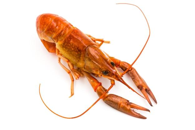 Вареный рак или пресноводный омар на белом фоне.