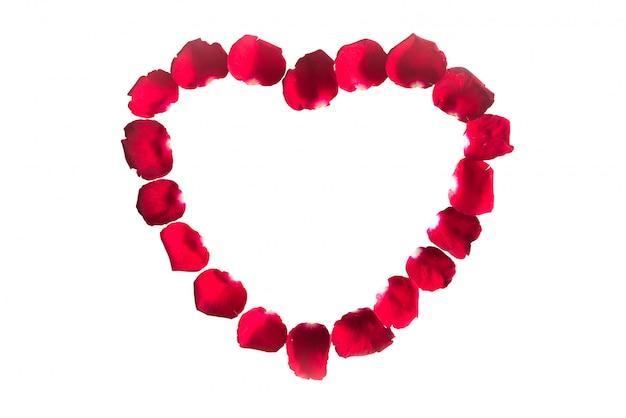 分離された赤いバラの花びらの美しい心