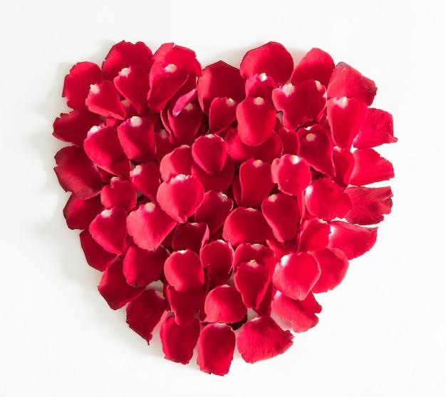 白で隔離赤いバラの花びらの美しい心