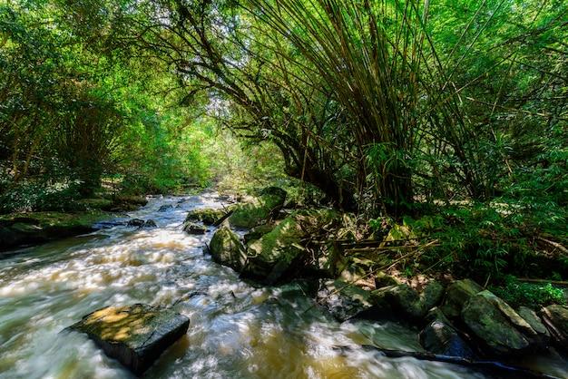 自然の中の美しい滝