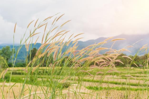 草の花と山は背景です
