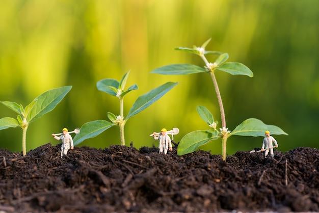 野生の農家が畑で芽を育てる