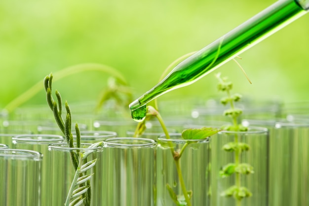 試験管、バイオテクノロジー研究の概念で成長している若いサンプル植物の上に緑色のサンプル化学物質を滴下ピペット