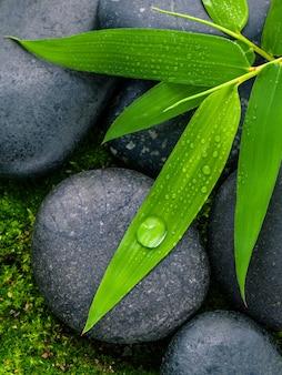 Речные камни и листья бамбука с концепциями капли дождя.