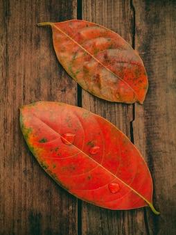 グレーの木製のボードに落ちる色の葉と秋の背景。