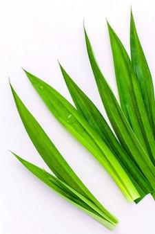 パンダンはデザートとアロマセラピー用のハーブ成分を葉に入れます。