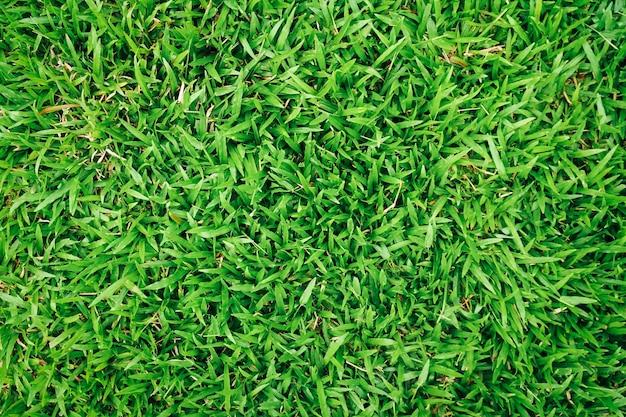Естественная зеленая трава фон с винтажным фильтром