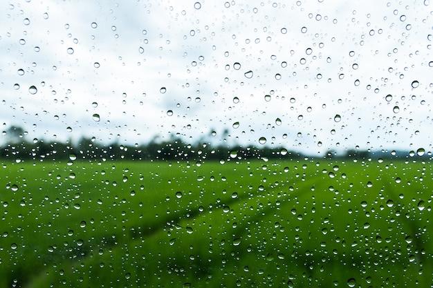 Капли воды на стекле с зеленым фоном рисового поля